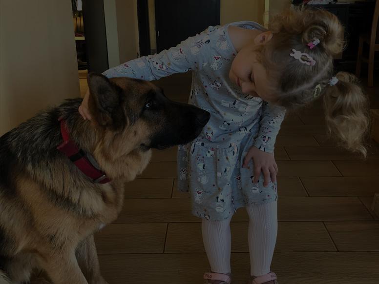 Boks 3 góra - SDMA badanie nerek psów ikotów